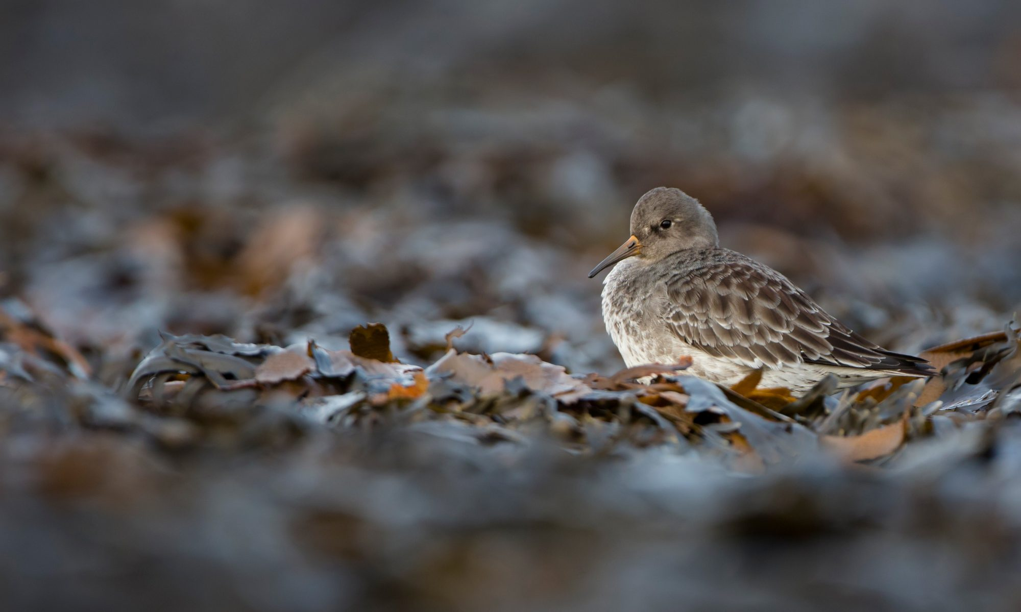 Low-Carbon Birding